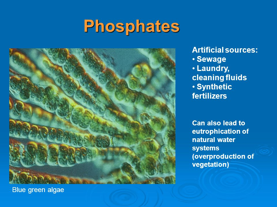 Phosphates Artificial sources: Sewage Laundry, cleaning fluids