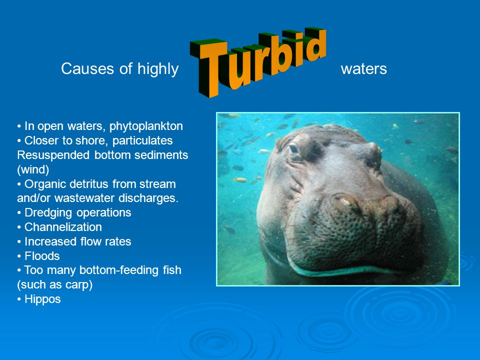 Turbid Causes of highly waters In open waters, phytoplankton