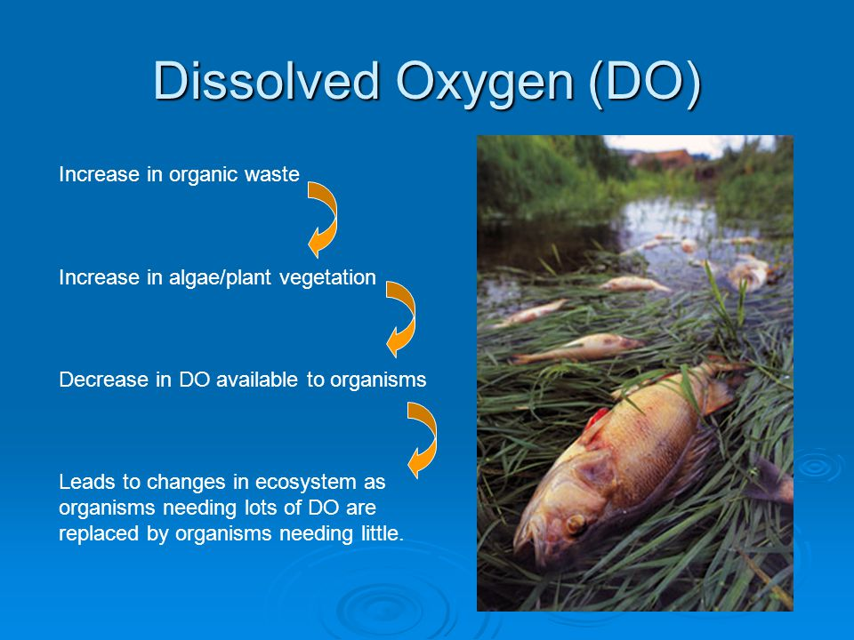 Dissolved Oxygen (DO) Increase in organic waste