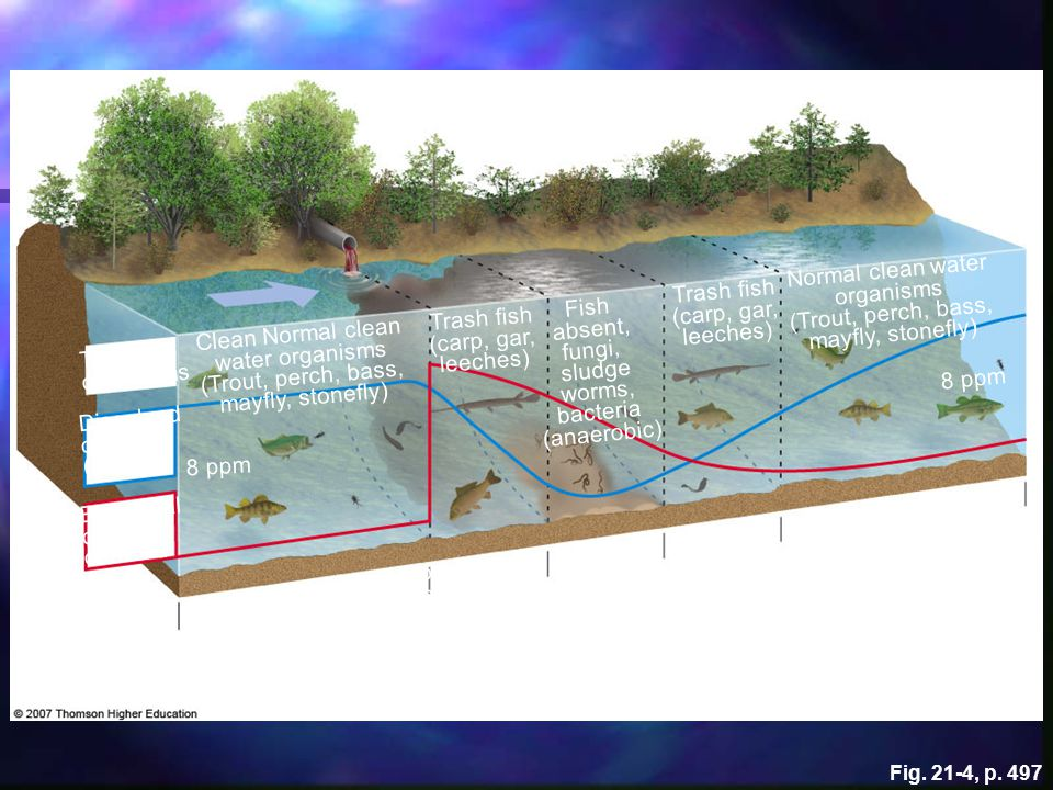 Normal clean water organisms
