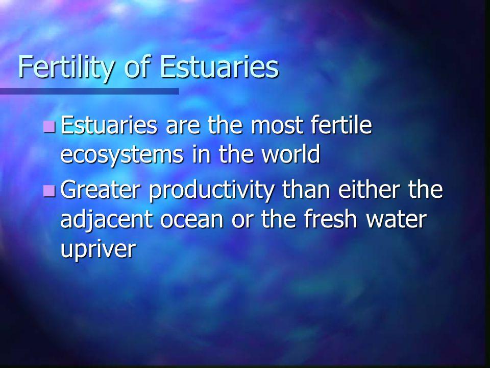 Fertility of Estuaries