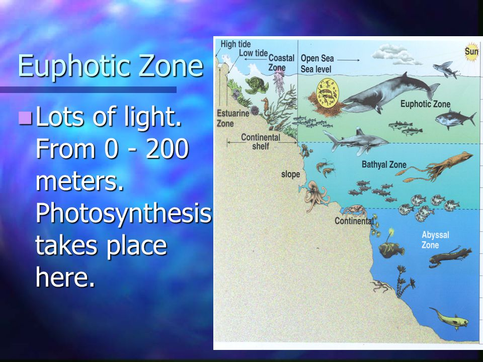 Euphotic Zone Lots of light. From 0 - 200 meters. Photosynthesis takes place here.