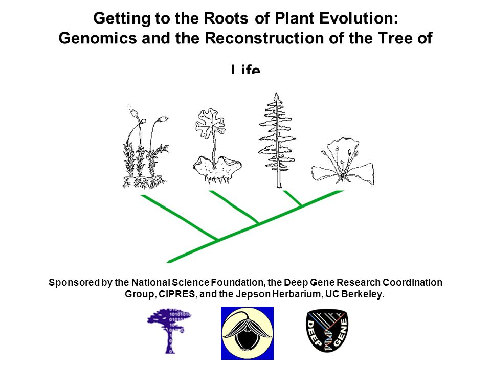 Getting to the Roots of Plant Evolution: Genomics and the Reconstruction of the Tree of Life
