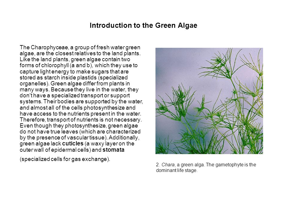 Introduction to the Green Algae