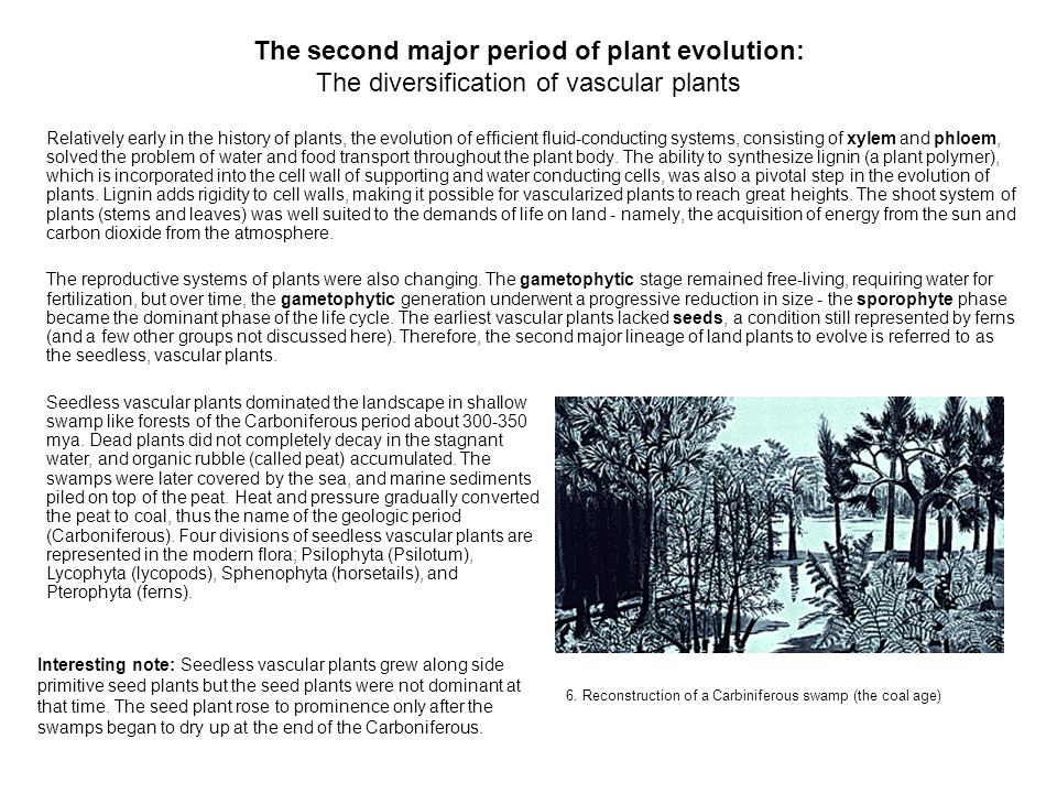 The second major period of plant evolution: The diversification of vascular plants