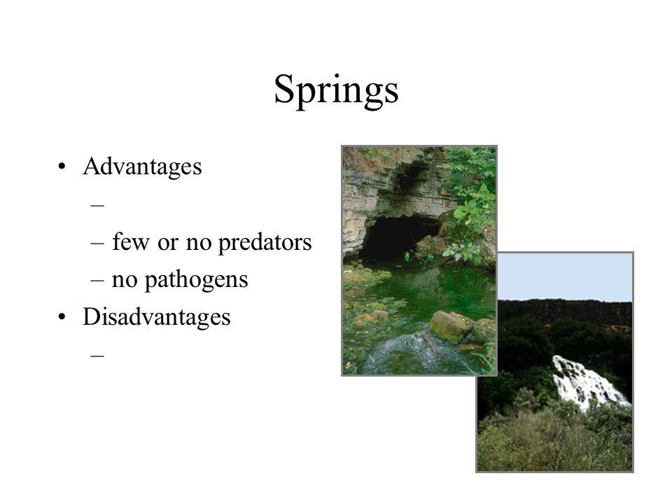Springs Advantages few or no predators no pathogens Disadvantages