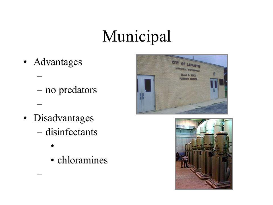 Municipal Advantages no predators Disadvantages disinfectants