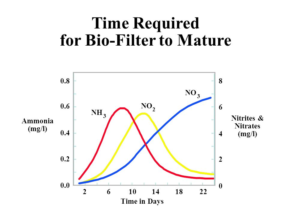 for Bio-Filter to Mature