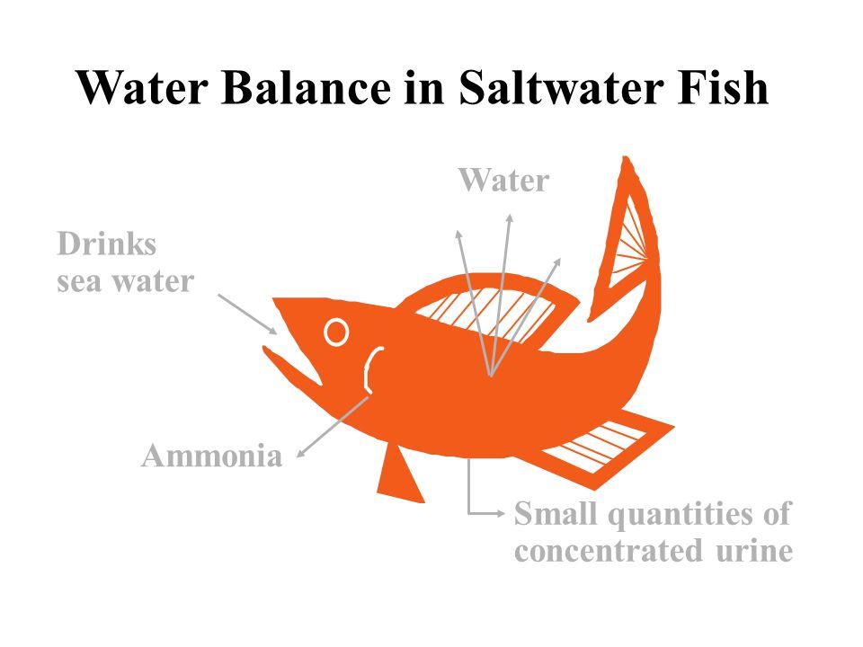Water Balance in Saltwater Fish