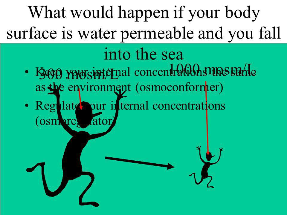 What would happen if your body surface is water permeable and you fall into the sea