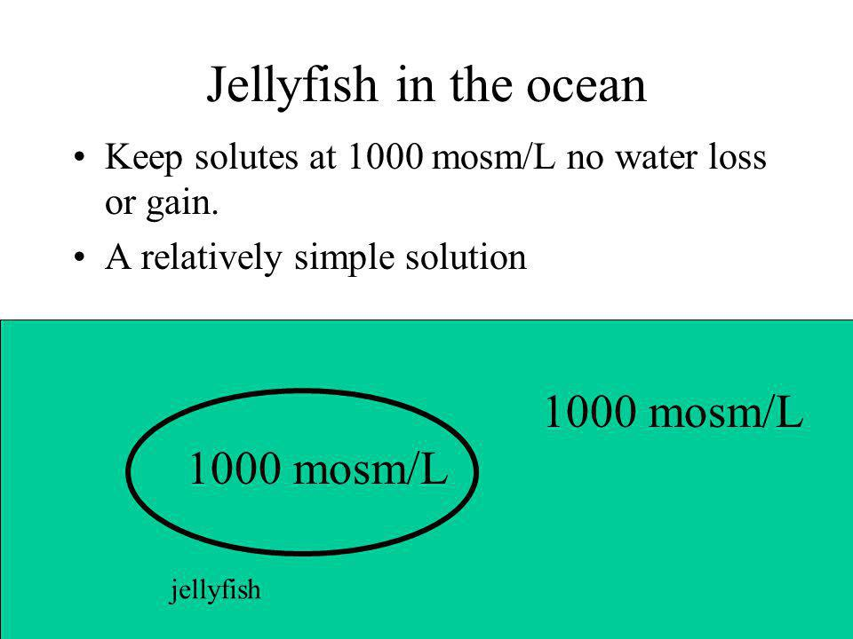 Jellyfish in the ocean 1000 mosm/L 1000 mosm/L