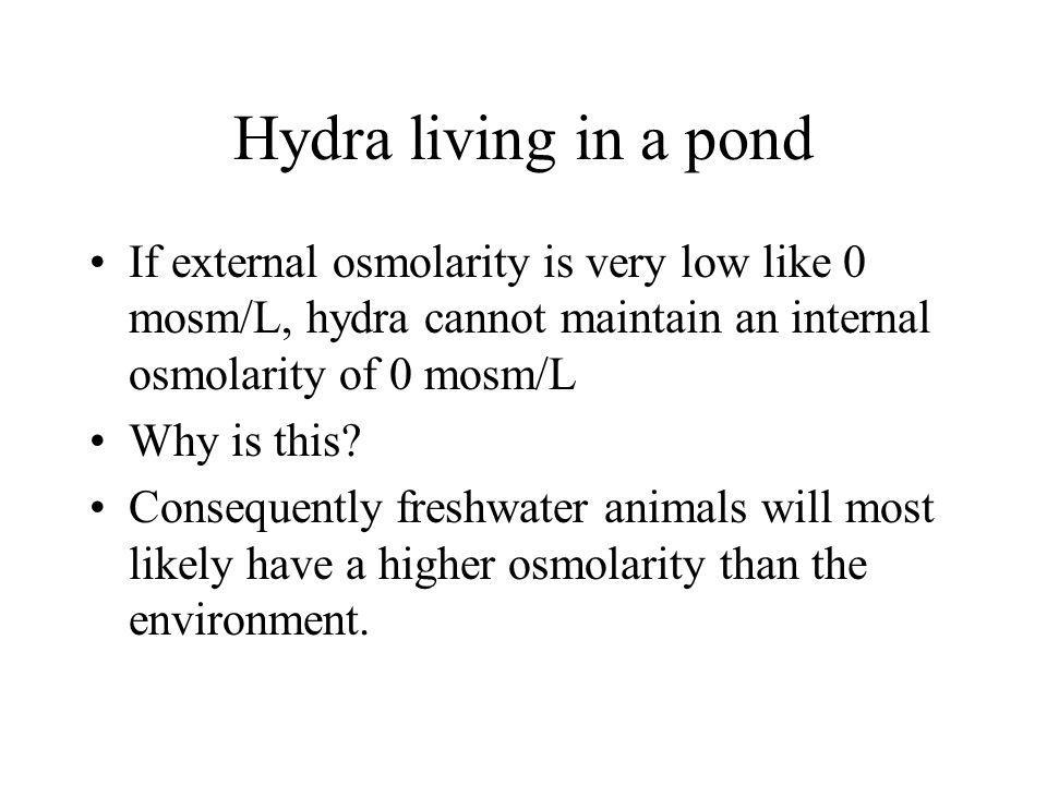 Hydra living in a pond If external osmolarity is very low like 0 mosm/L, hydra cannot maintain an internal osmolarity of 0 mosm/L.