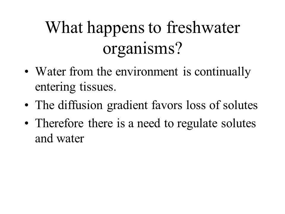 What happens to freshwater organisms