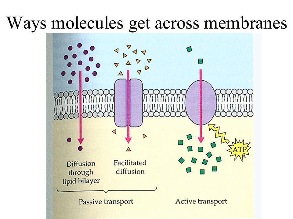 Ways molecules get across membranes