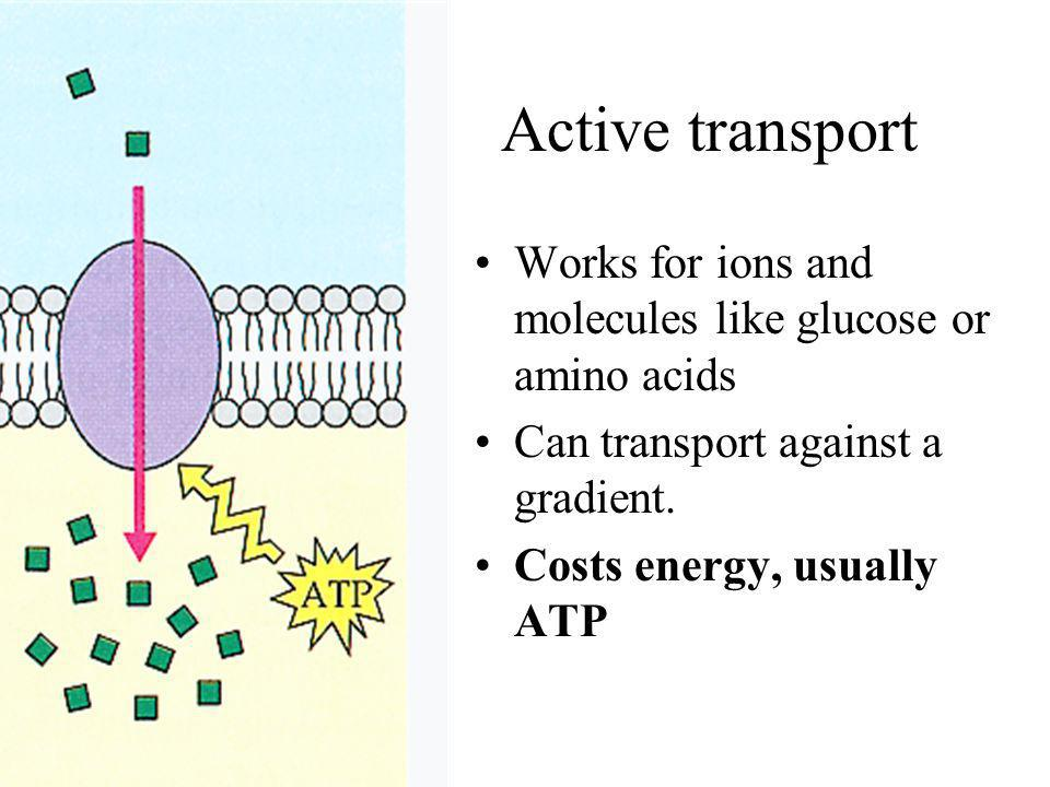 Active transport Works for ions and molecules like glucose or amino acids. Can transport against a gradient.