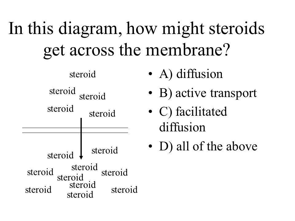 In this diagram, how might steroids get across the membrane