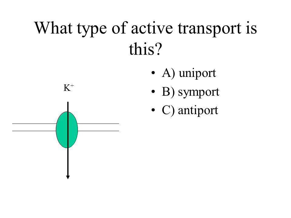 What type of active transport is this