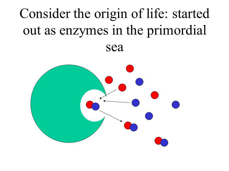 Consider the origin of life: started out as enzymes in the primordial sea