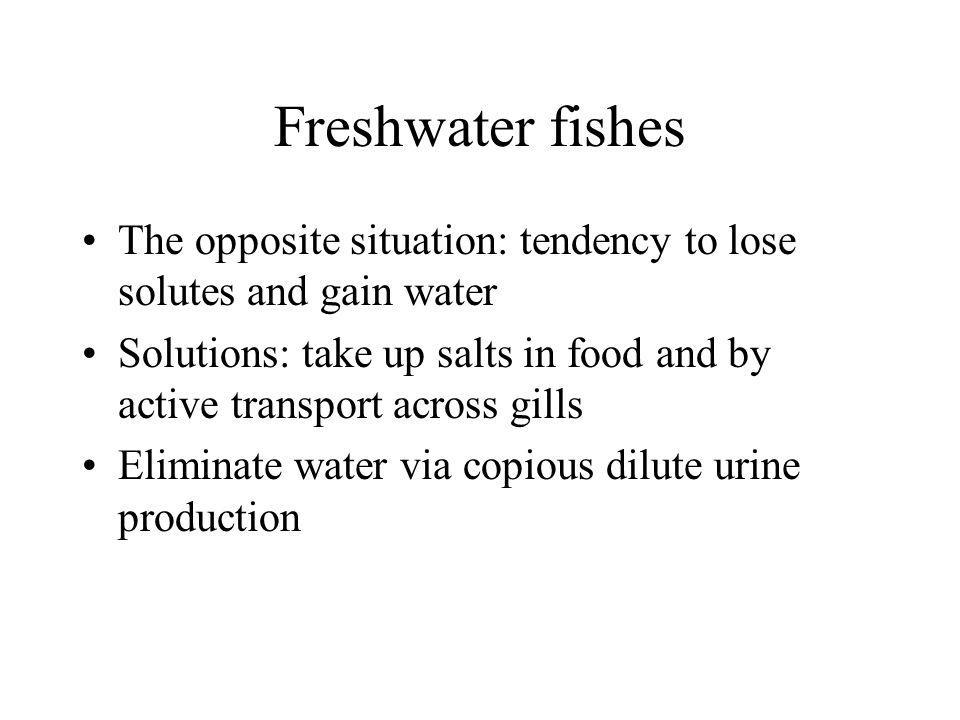 Freshwater fishes The opposite situation: tendency to lose solutes and gain water.