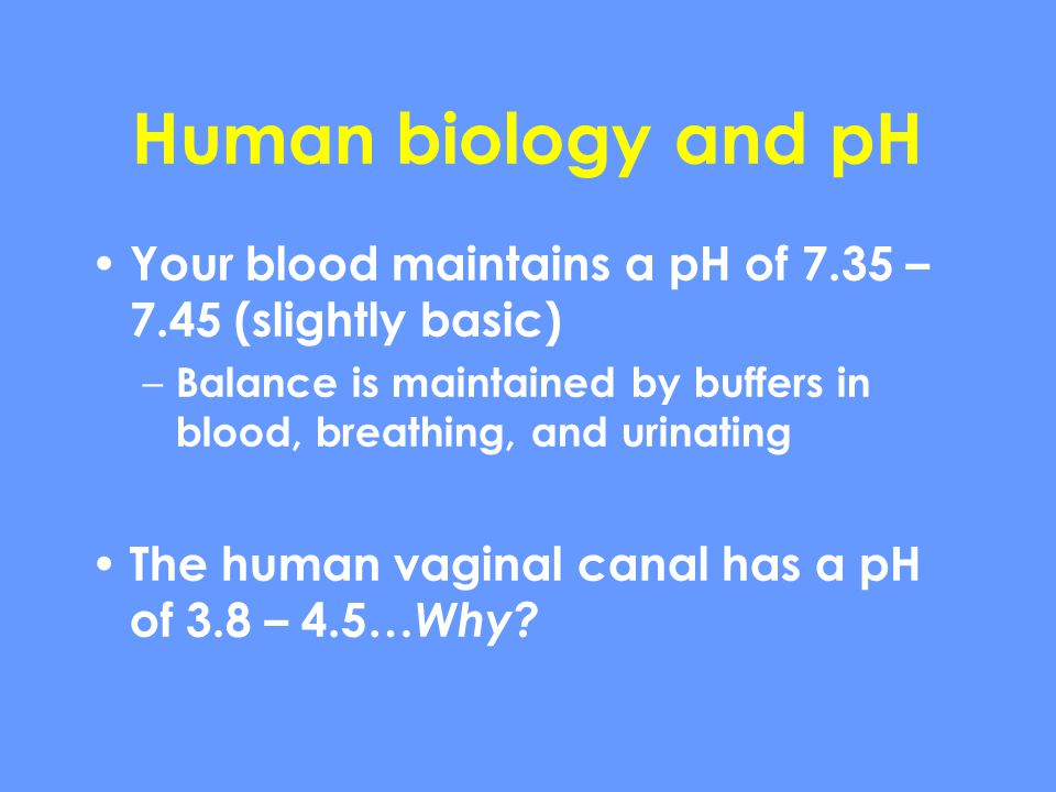 Human biology and pH Your blood maintains a pH of 7.35 – 7.45 (slightly basic) Balance is maintained by buffers in blood, breathing, and urinating.
