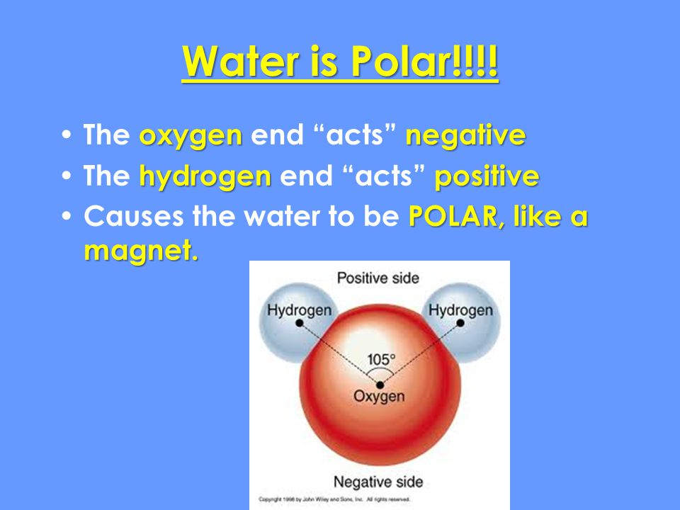 Water is Polar!!!! The oxygen end acts negative
