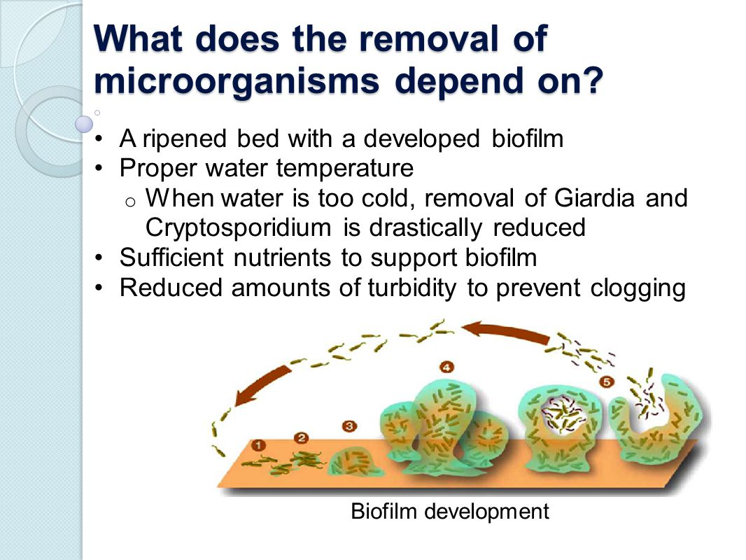 What does the removal of microorganisms depend on