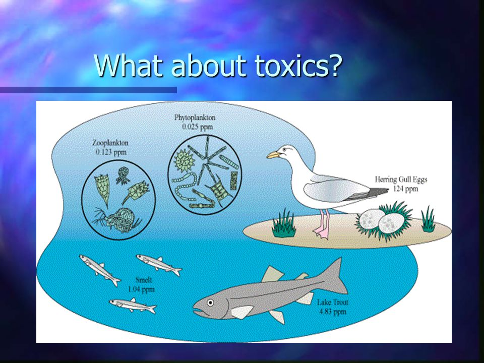 What about toxics