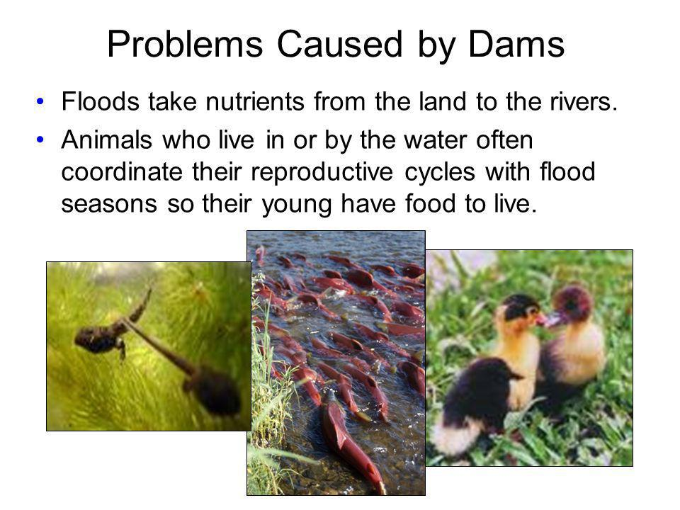 Problems Caused by Dams