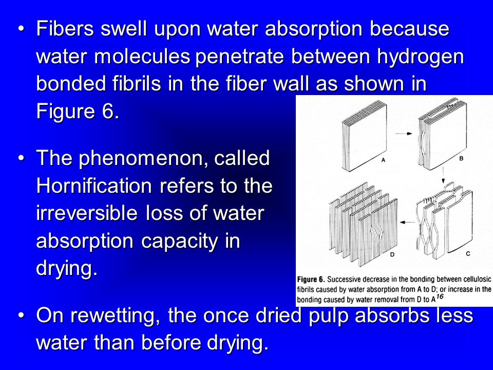 Fibers swell upon water absorption because water molecules penetrate between hydrogen bonded fibrils in the fiber wall as shown in Figure 6.