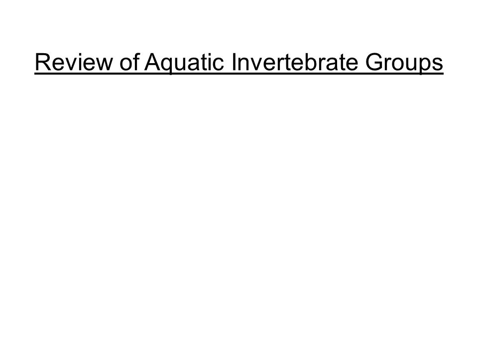 Review of Aquatic Invertebrate Groups
