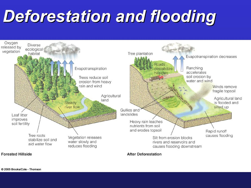 Deforestation and flooding