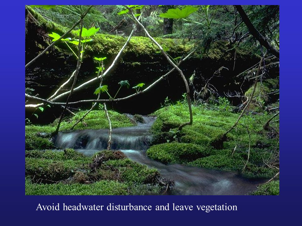 Avoid headwater disturbance and leave vegetation