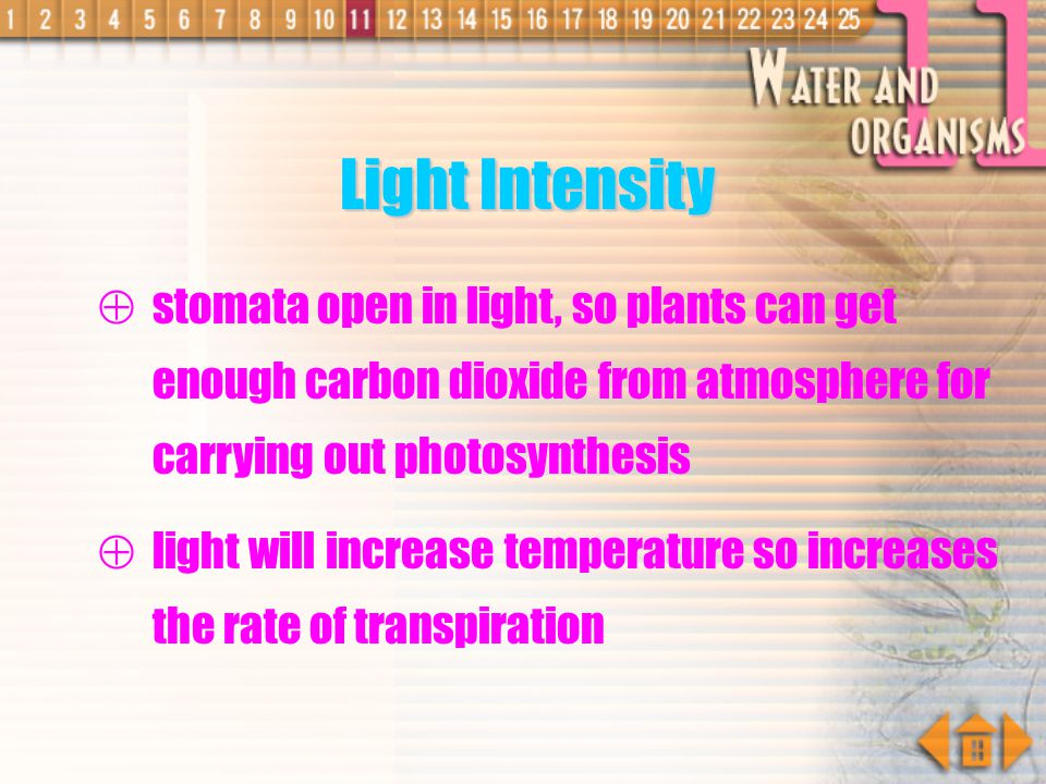 Light Intensity stomata open in light, so plants can get enough carbon dioxide from atmosphere for carrying out photosynthesis.