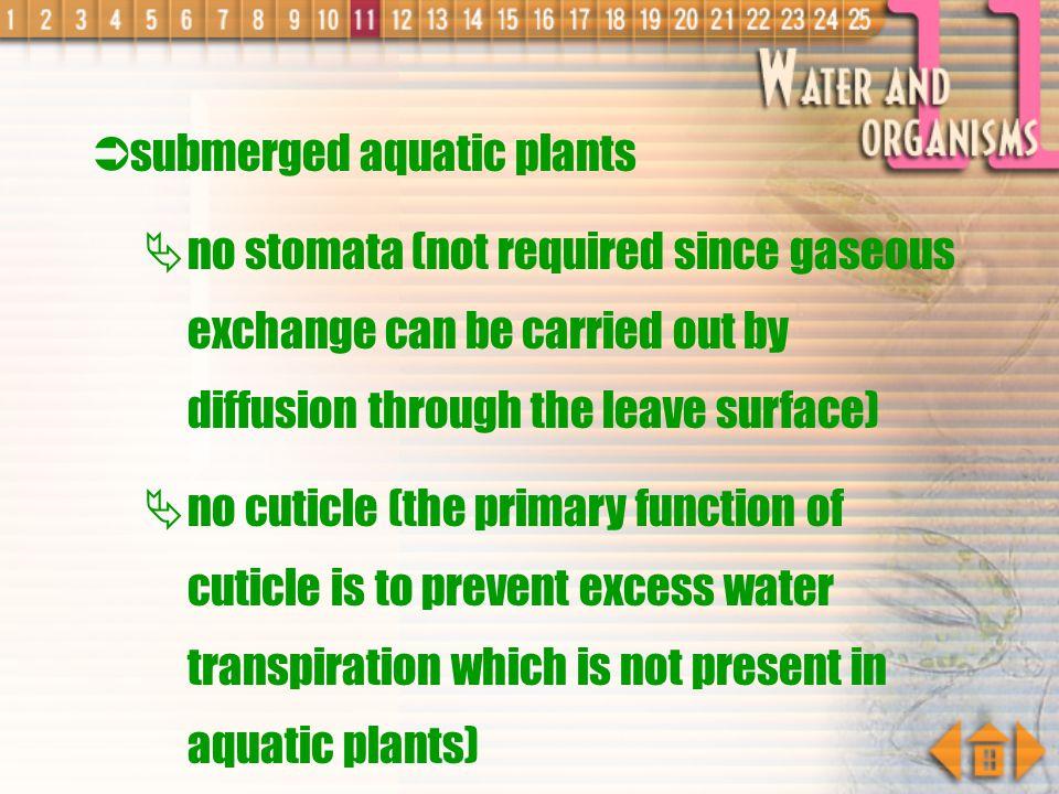 submerged aquatic plants