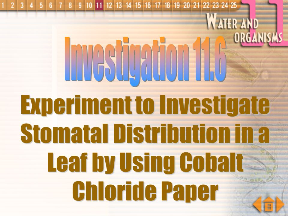 Investigation 11.6 Experiment to Investigate Stomatal Distribution in a Leaf by Using Cobalt Chloride Paper.