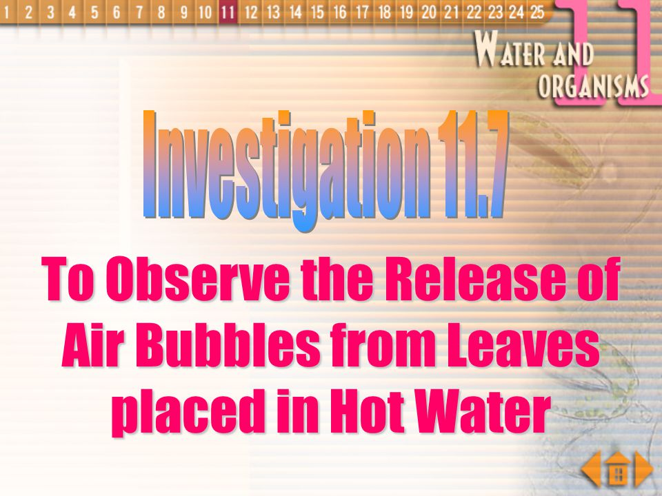 To Observe the Release of Air Bubbles from Leaves placed in Hot Water