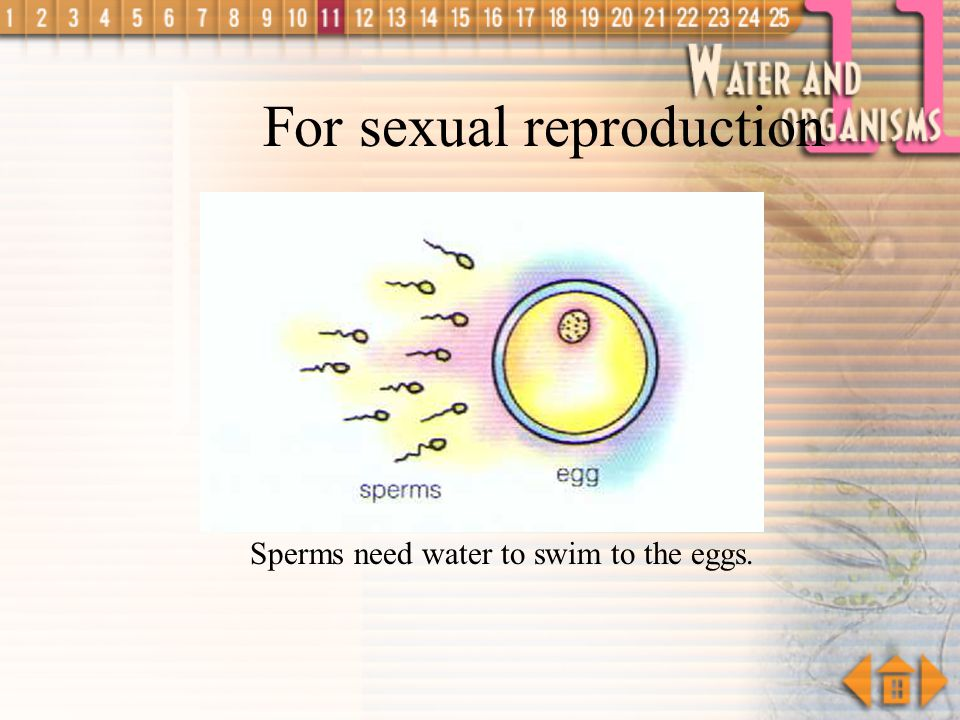 For sexual reproduction