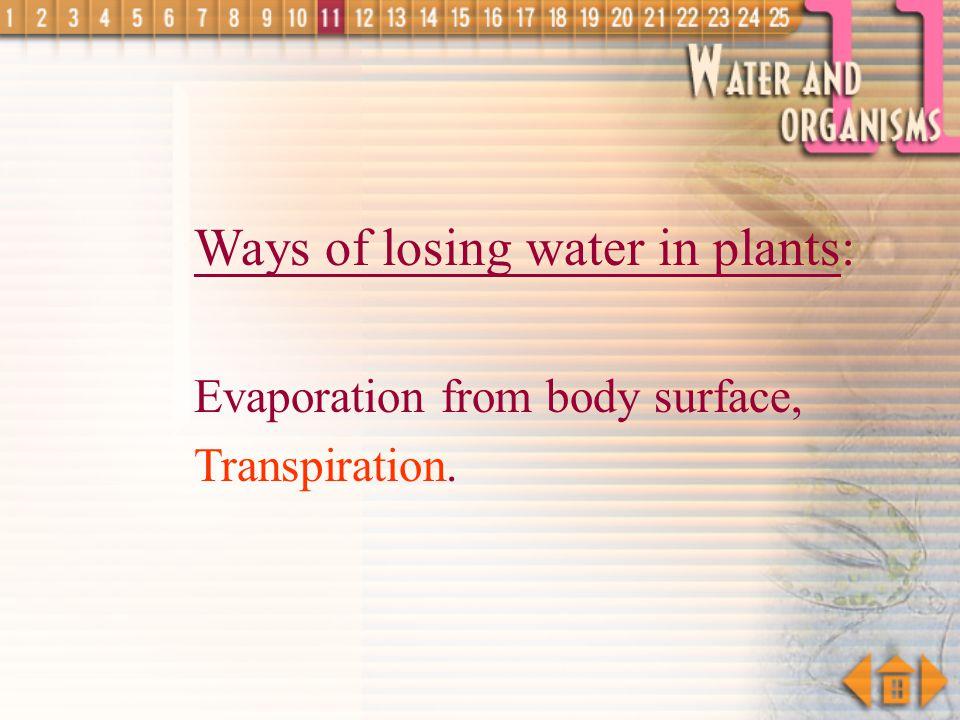 Ways of losing water in plants: