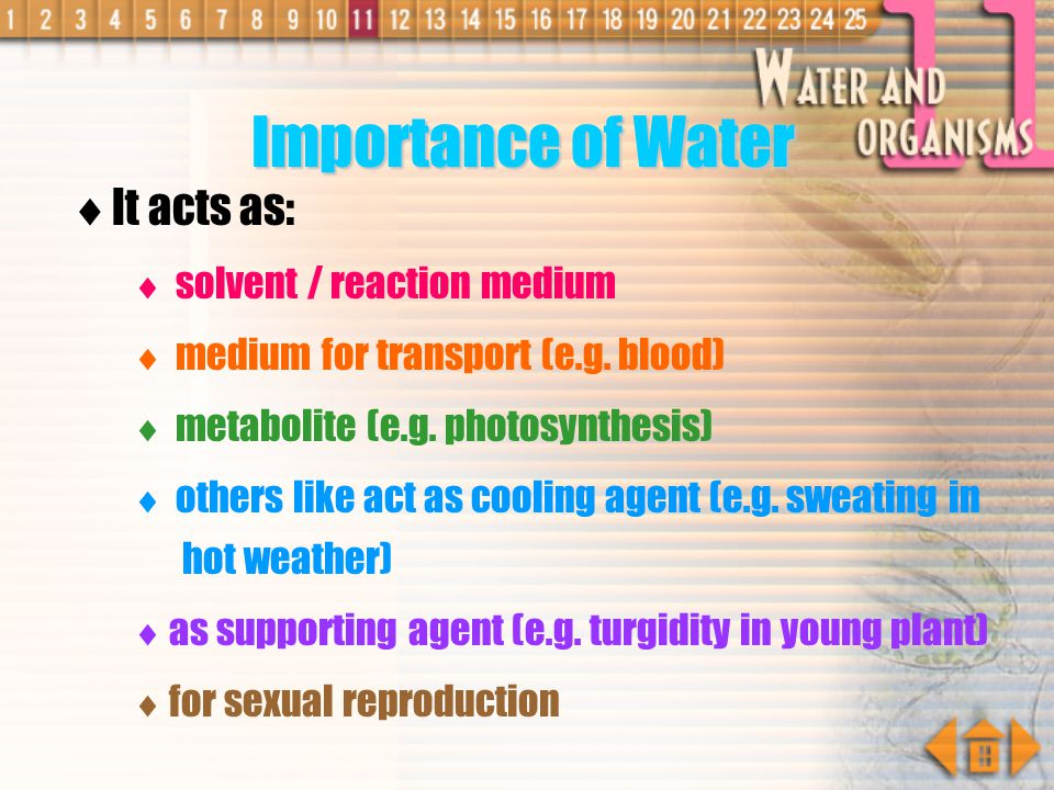 Importance of Water It acts as: solvent / reaction medium