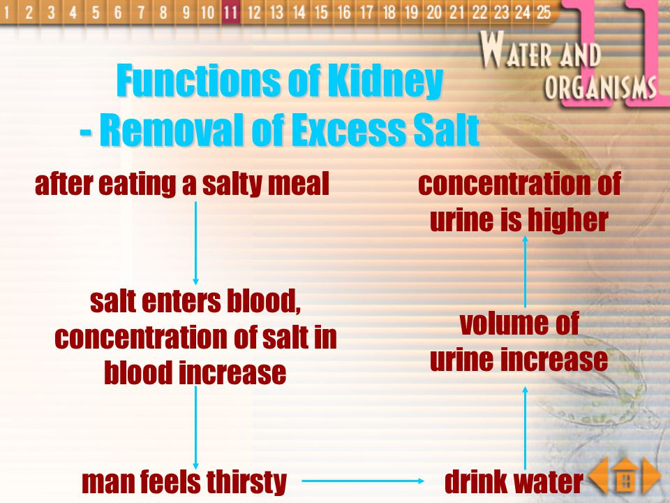 Functions of Kidney - Removal of Excess Salt