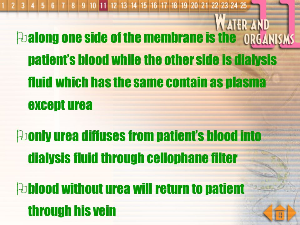 along one side of the membrane is the patient's blood while the other side is dialysis fluid which has the same contain as plasma except urea