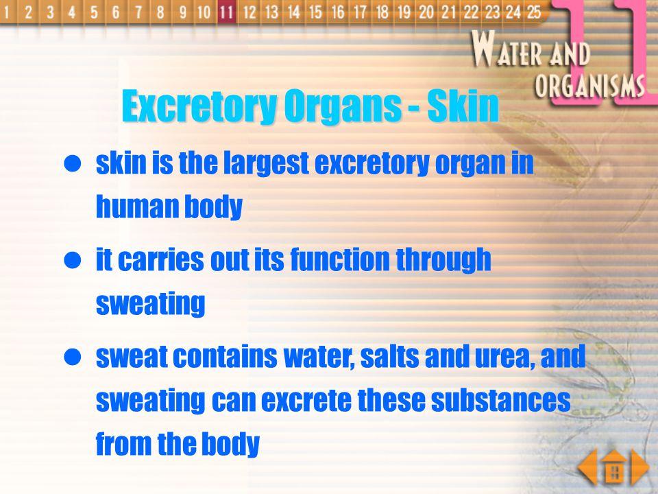 Excretory Organs - Skin