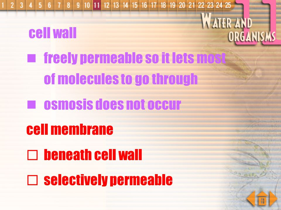 freely permeable so it lets most of molecules to go through