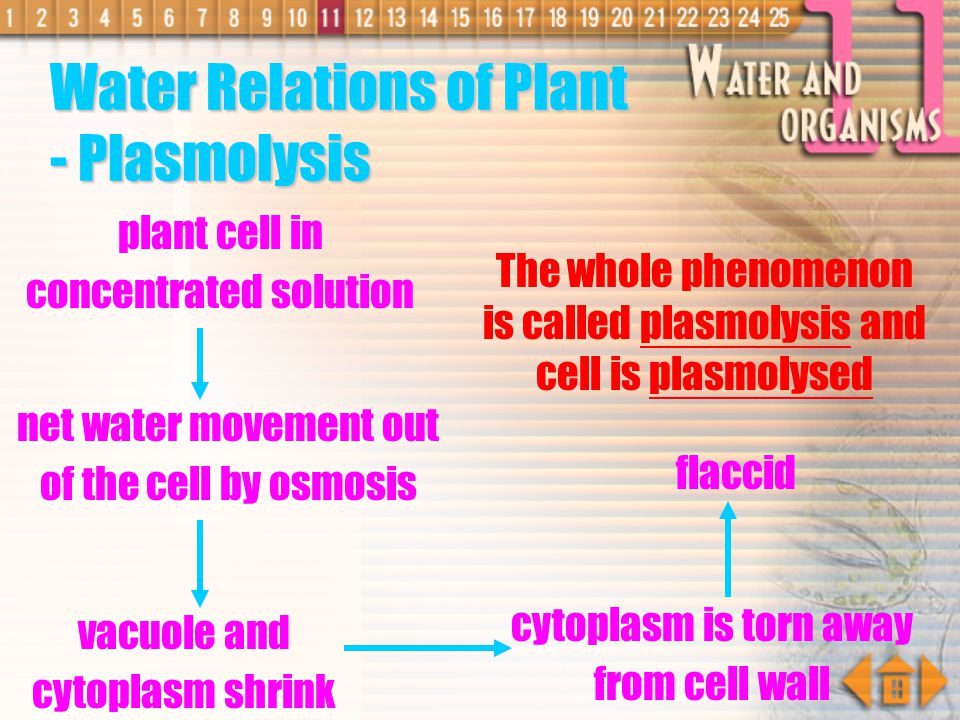 Water Relations of Plant - Plasmolysis