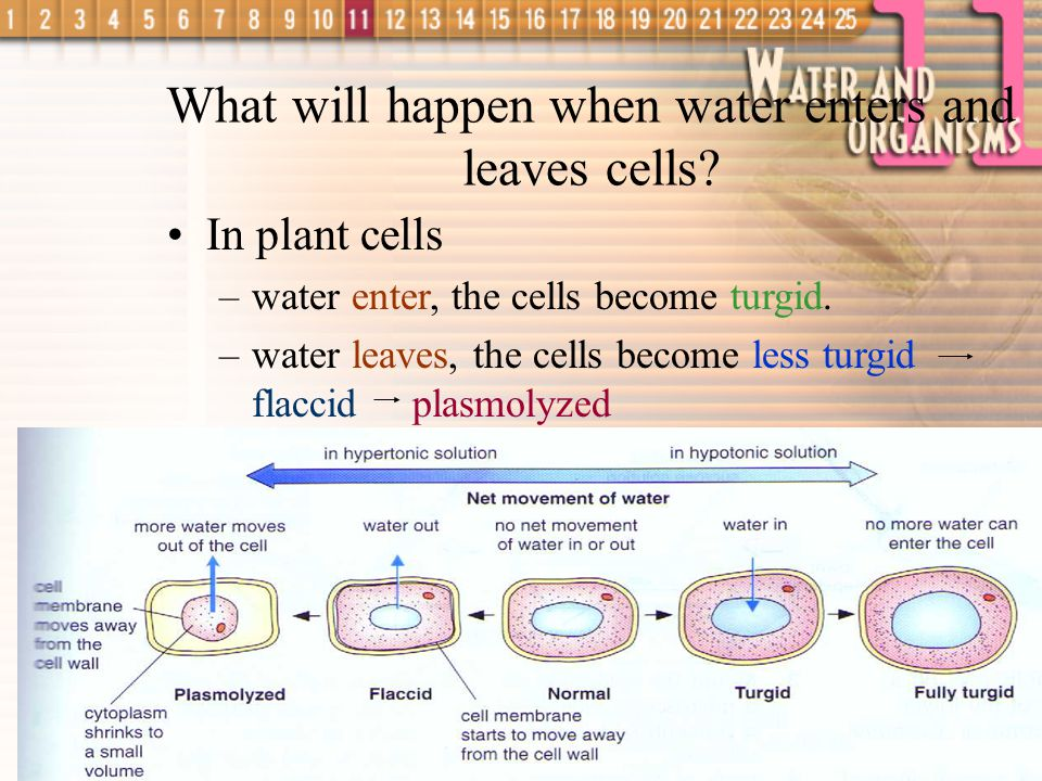 What will happen when water enters and leaves cells