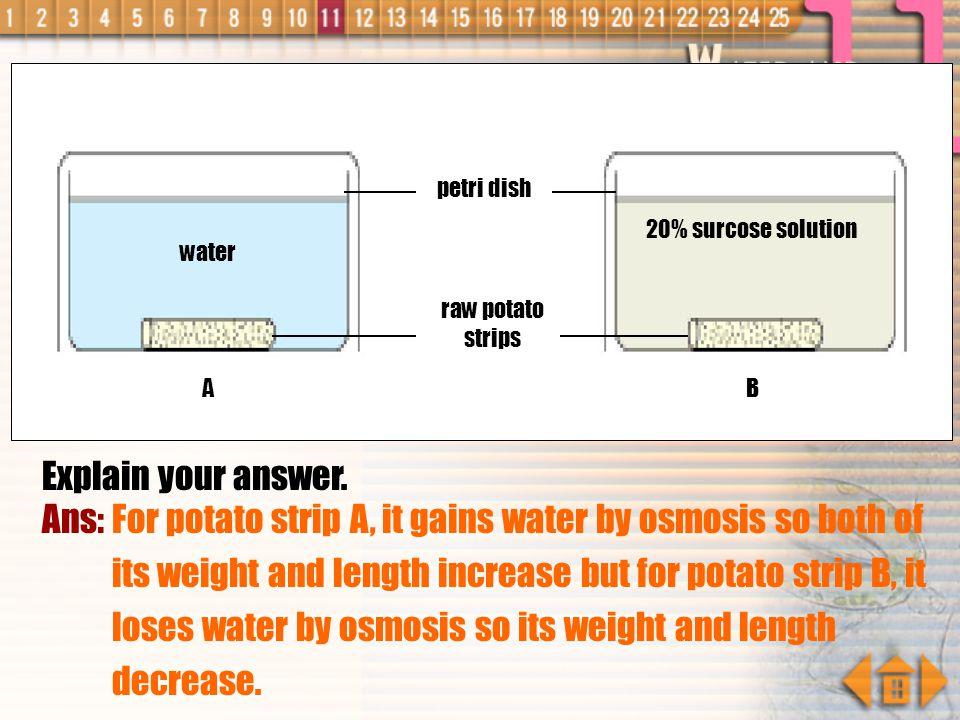 petri dish water. 20% surcose solution. raw potato strips. A. B. Explain your answer.