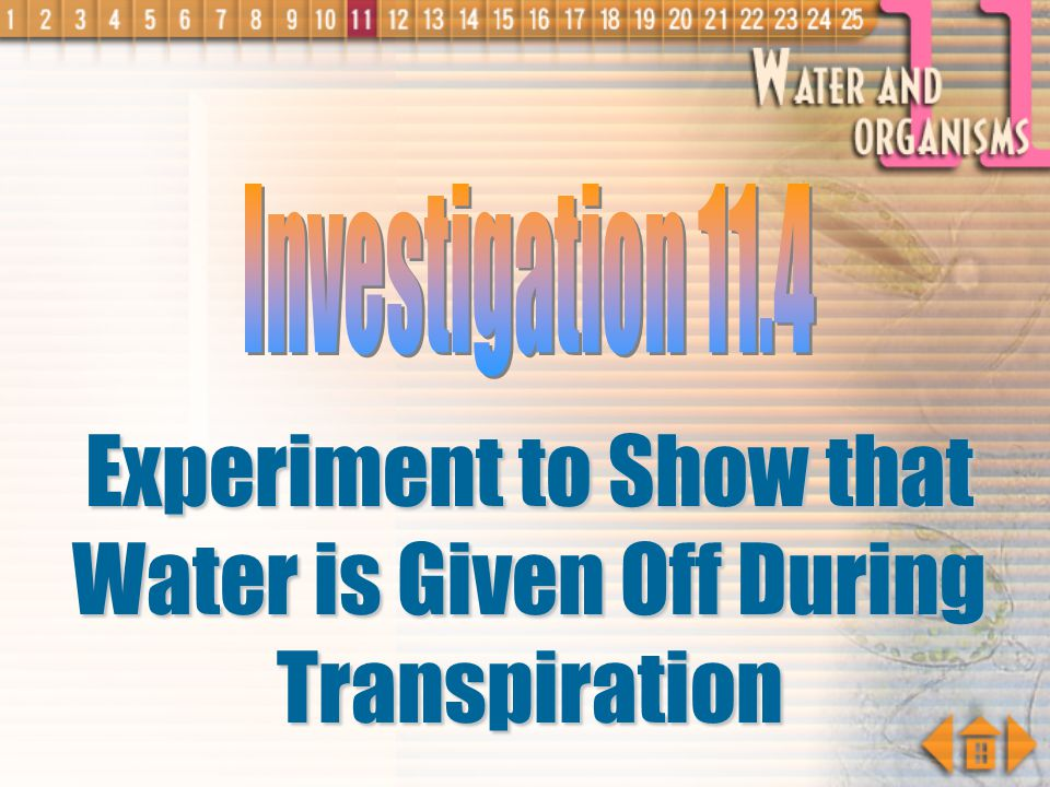 Experiment to Show that Water is Given Off During Transpiration