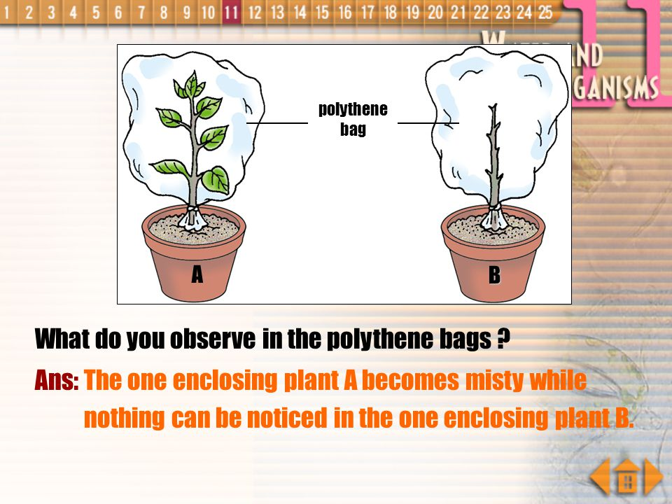 What do you observe in the polythene bags