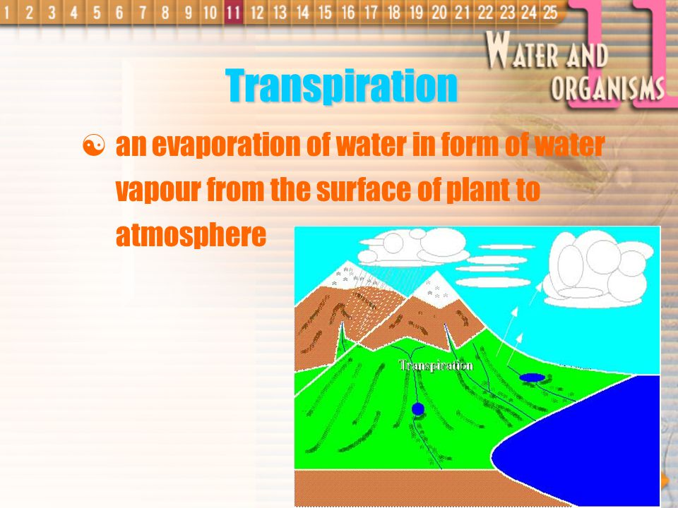Transpiration an evaporation of water in form of water vapour from the surface of plant to atmosphere.