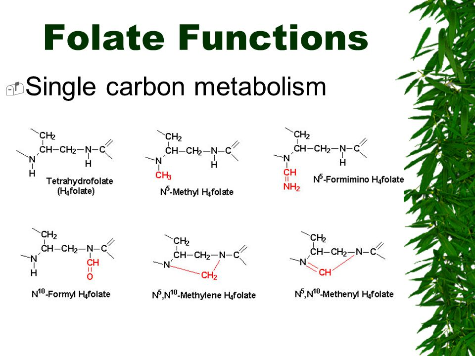 Folate Functions Single carbon metabolism